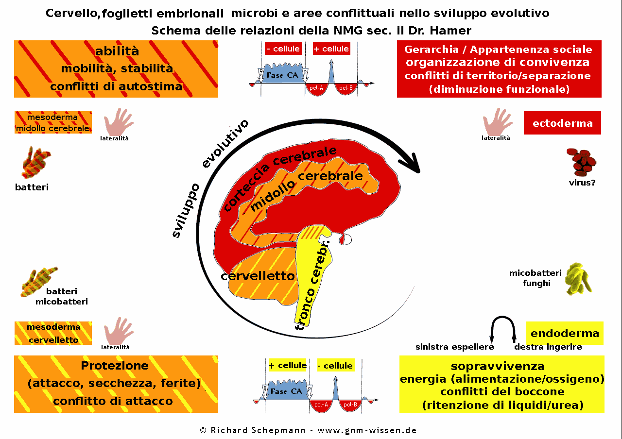 schema-cervello-tessuti-microbi